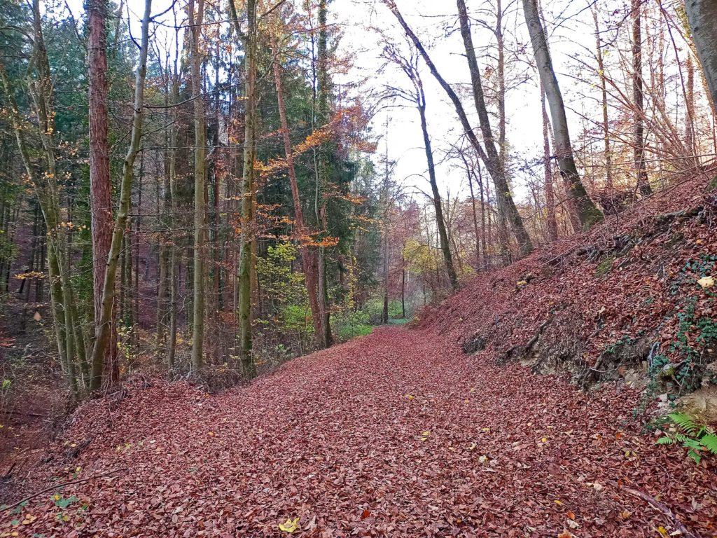 Der Müllheimer Eichwald